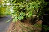 Road Through Savernake