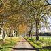 Beech Avenue, Altyre Estate