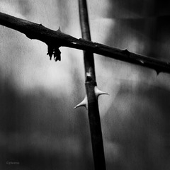 thorns on a cross