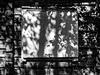 shadows (pip)