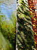 Water. Reflections and Abstracts 1