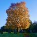 Vivid autumn colours