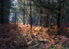 Thetford Forest 26th Oct 15.