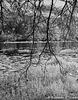 Trout Creek 010