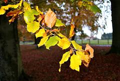 Trésors de l'automne