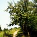 Wandern auf Usedom