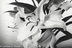 White Oriental Santander Lily Topaz Filter-001