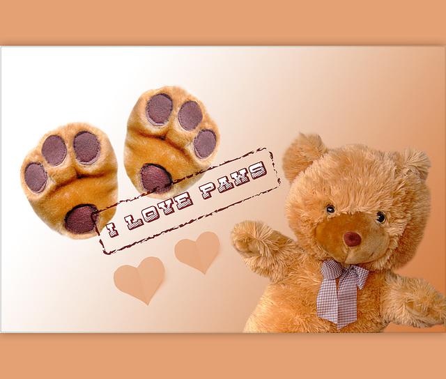 Paws ♥ ♥