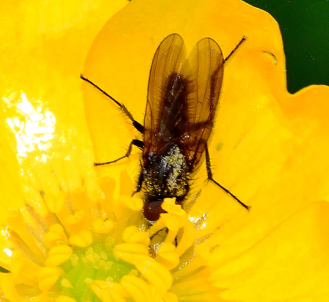 Beasties in Buttercups 2