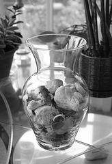 A Vase of Shells