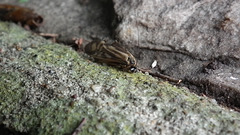 un travail de fourmi 2 / ant's work 2