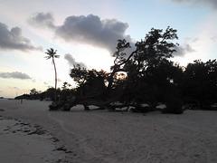 Lazy tree .... árbol perezoso