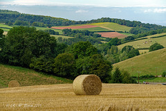 Harvest on the Quantock Hills