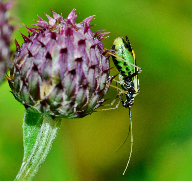 Things on Thistles 5