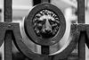 The lion speaks - HFF folks