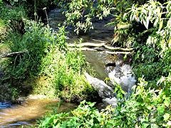 Matarawa Stream