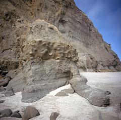 Banded Kraken Fossil