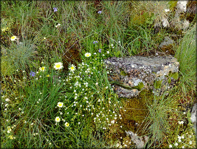 La Cabrera wildflowers and richly textured granite rock. PLEASE STAY, DON'T RUN AWAY (ESPECIALLY NOW)!!!
