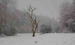 A lone tree in winter.