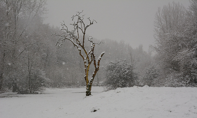 A lone tree in winter.