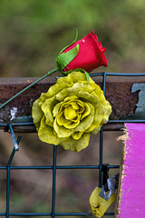 Red Rose and Yellow Rose