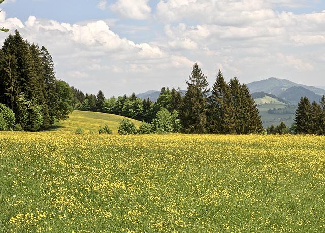 Im 'Bregenzerwald'