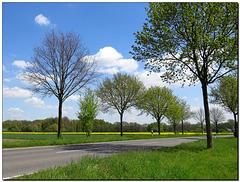Rapsfeld | Straße .... es war ein schöner Tag