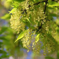 Douceur verte .../ Green sweetness...