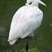 Egret.44jpg
