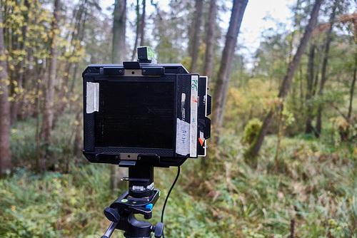 4x5 Kamera auf das Motiv Auwald gerichtet // -kamera-05886-co-04-11-18