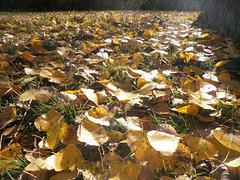 Die Blätter fallen.