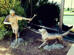 Fetch the stick