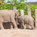 Elephant feeding a baby elephant.