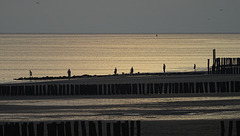 six silhouettes & some seagulls