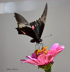 ~  Black & Pink  ~