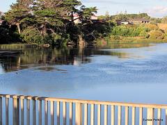 Opunake Lake Reflections,
