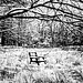 chair in the meadow