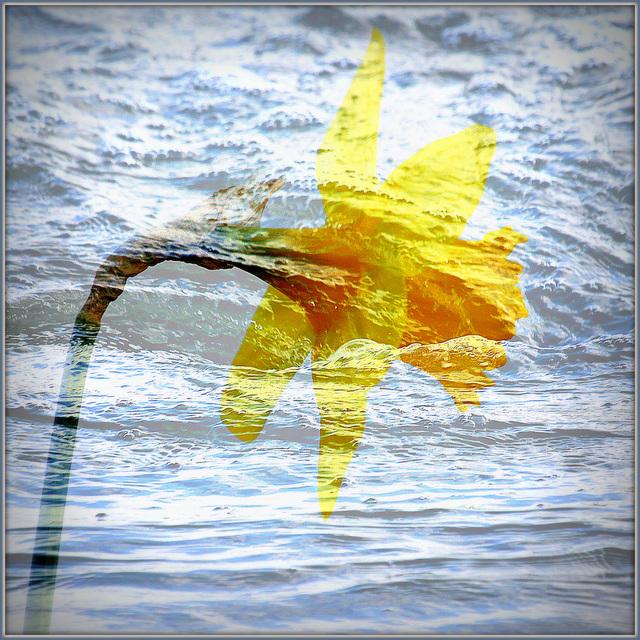 Une fleur et un torrent de larmes