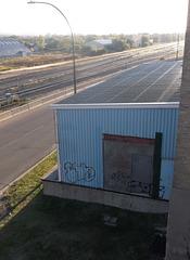 Graffitis incongrus / Incongruous graffitis