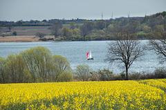 Die Ufer der Schlei werden intensiv landwirtschaftlich genutzt