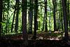 Sommerhitze - Waldeskühle // Summer heat - forest coolness