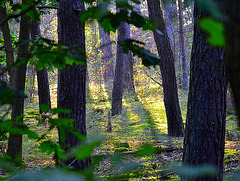 Forest light today 15.41 hour