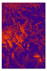Leaves at Birling Gap 10 8 2021 violet orange grad
