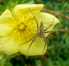 Y like YELLOW flower with spider