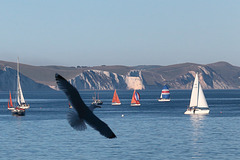 IMG 1843 Sailing