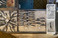 the fish market - 1