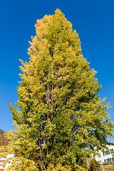 171015 arbre Montreux