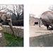 Elephants cant read