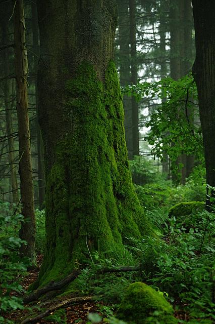 Wieder: Regenwald (1)