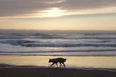 Entre  chien et loup à la nuit tombée sur Ocean Beach(SF-CA)
